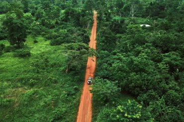 Deforestation: Wounds in the rainforest persist for more than 40 years