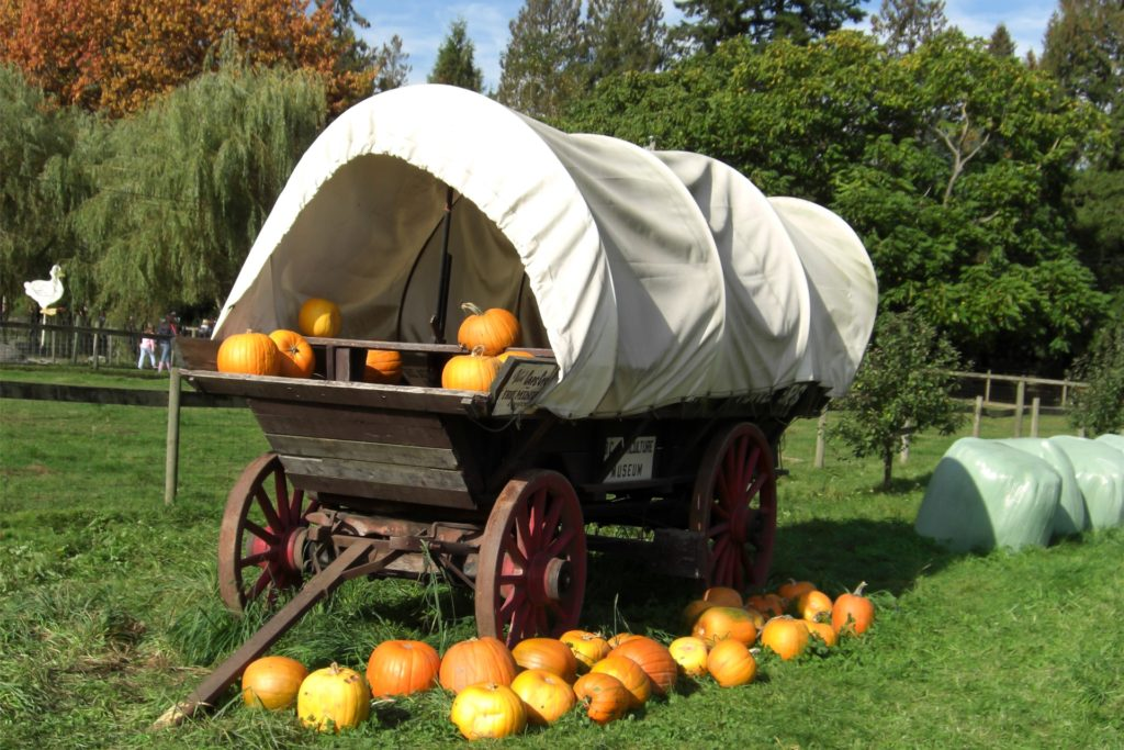 Pumpkins were displayed on this wagon.